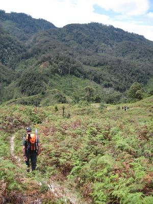 jungles1